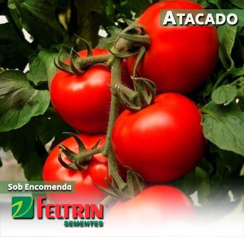 Sementes de Tomate Sotero - Atacado - Feltrin
