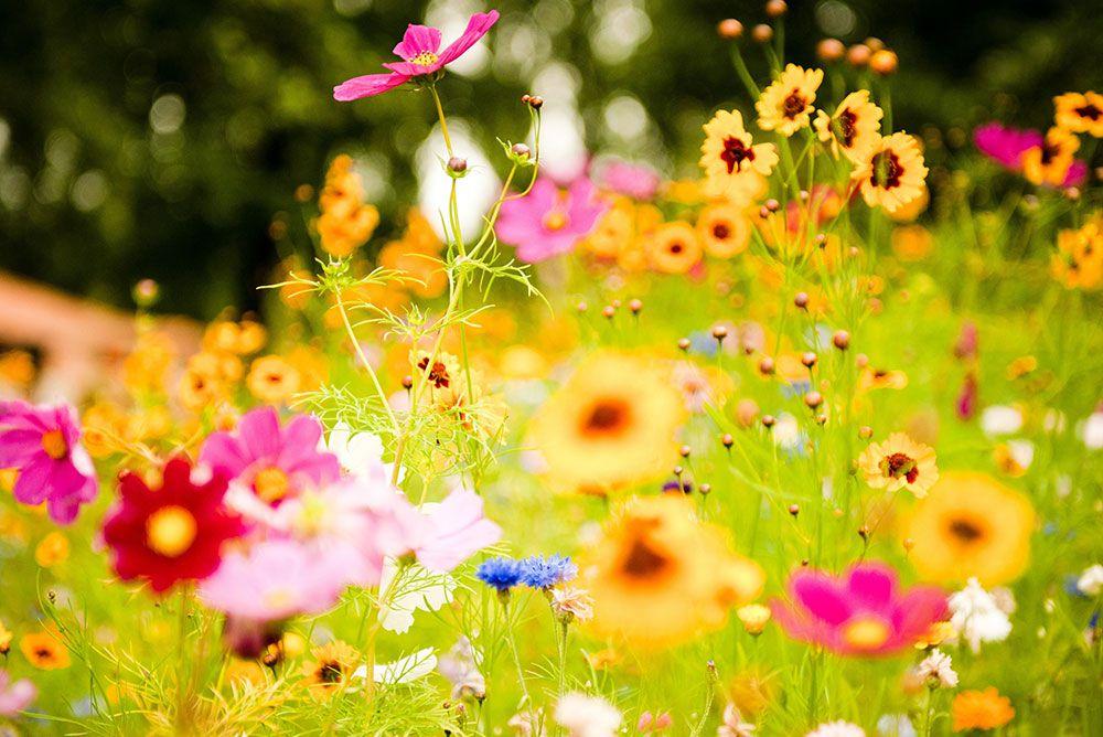 Papel De Parede 3D | Flores 0001 - Papel de Parede para Sala