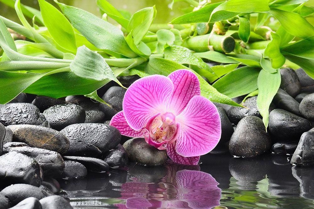 Papel De Parede 3D | Flores 0004 - Papel de Parede para Sala  - Paredes Decoradas