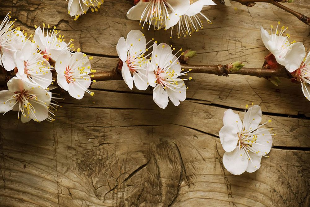 Papel De Parede 3D | Flores 0008 - papel de parede paisagem  - Paredes Decoradas