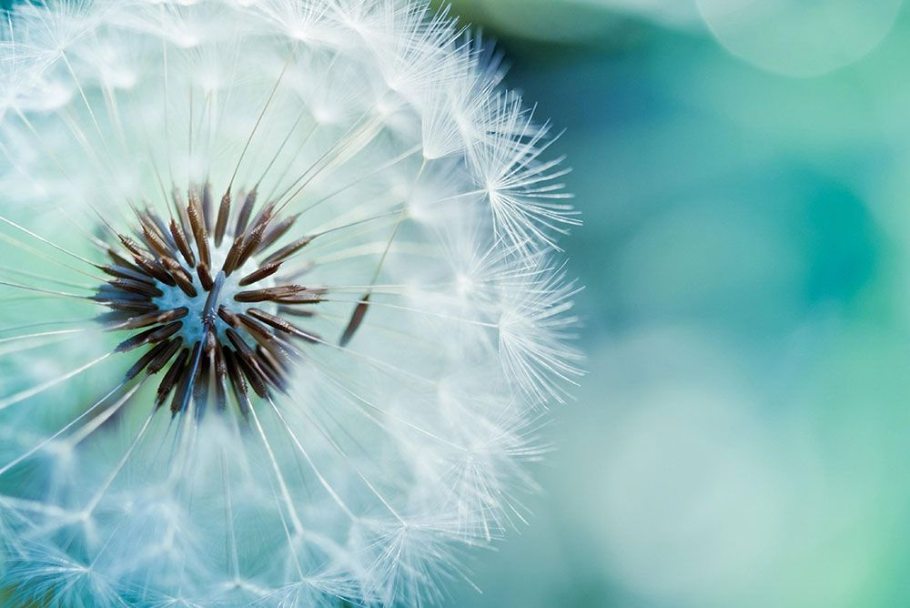 Papel De Parede 3D | Flores 0014 - papel de parede de flores  - Paredes Decoradas