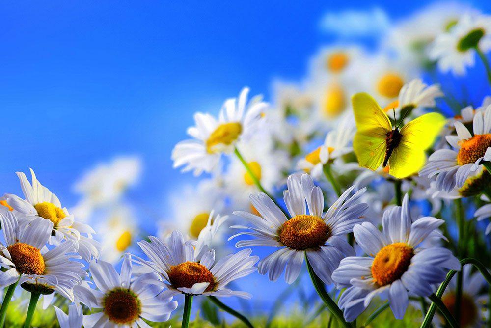 Papel De Parede 3D | Flores 0016 - papel de parede de flores  - Paredes Decoradas