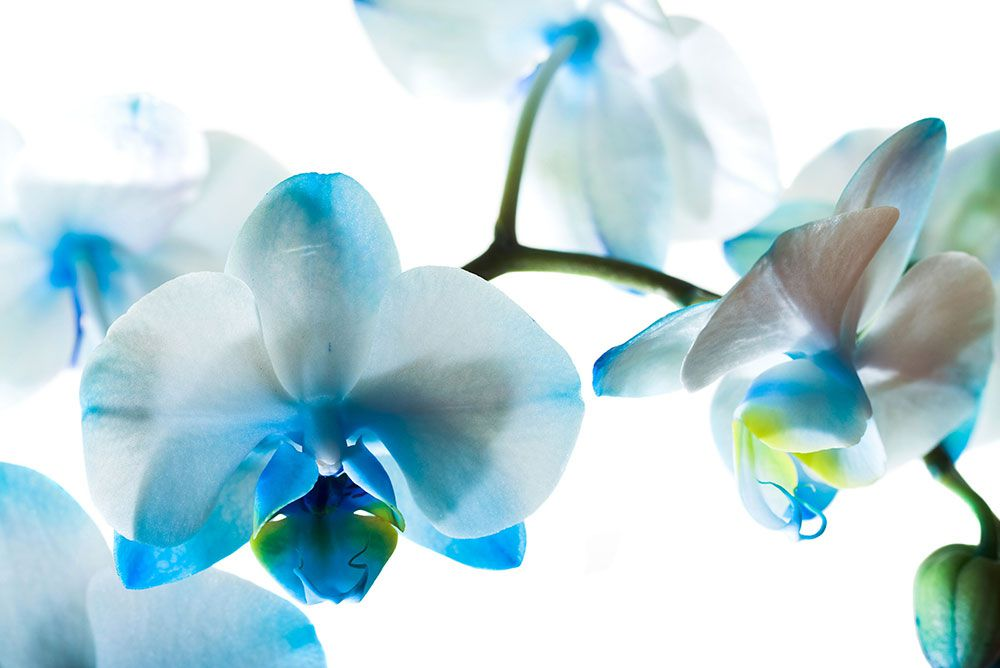 Papel De Parede 3D   Flores 0018 - papel de parede de flores  - Paredes Decoradas