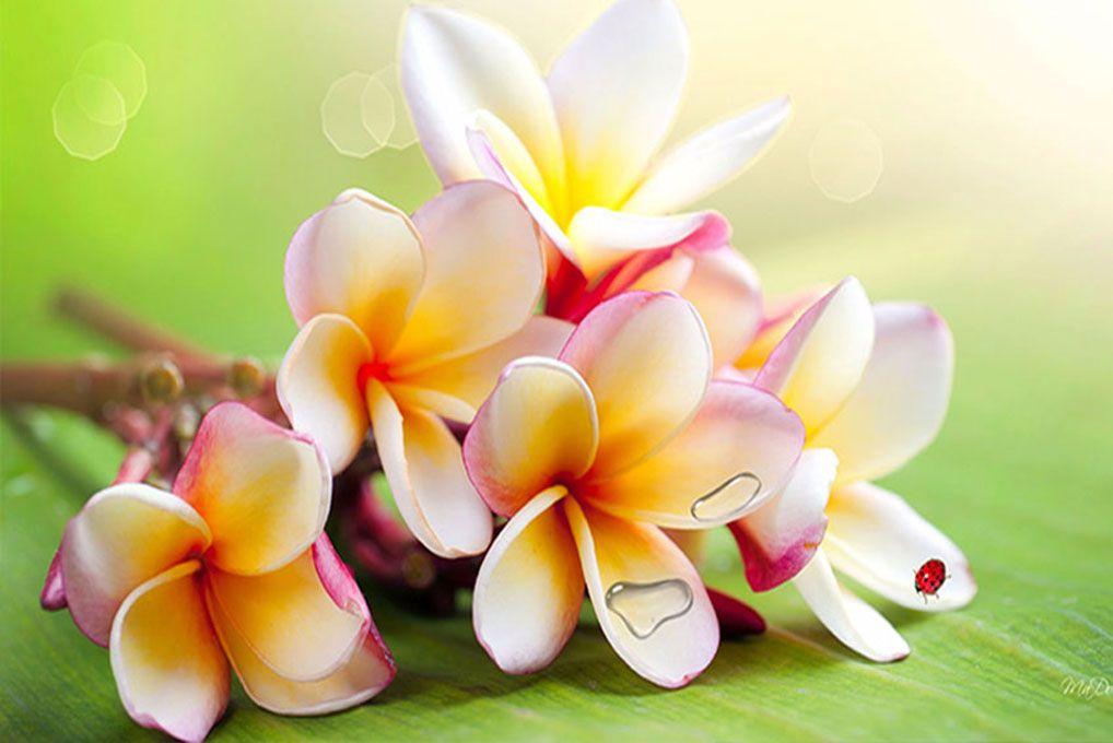 Papel De Parede 3D | Flores 0029 - papel de parede flores  - Paredes Decoradas