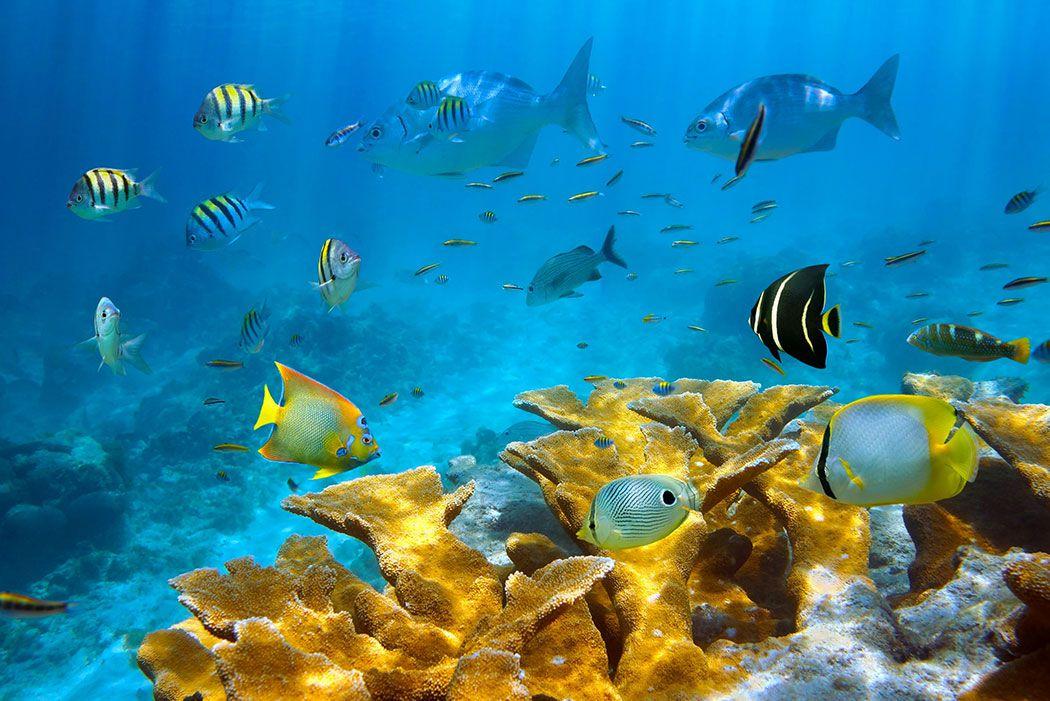 Papel De Parede 3D | Oceanos 0001 - papel de parede paisagem  - Paredes Decoradas
