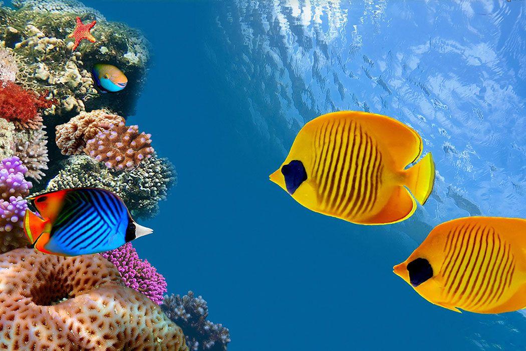 Papel De Parede 3D | Oceanos 0003 - papel de parede paisagem  - Paredes Decoradas