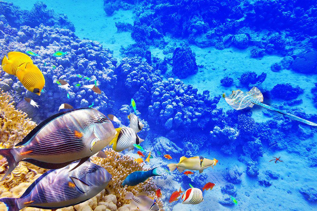 Papel De Parede 3D | Oceanos 0008 - papel de parede paisagem  - Paredes Decoradas