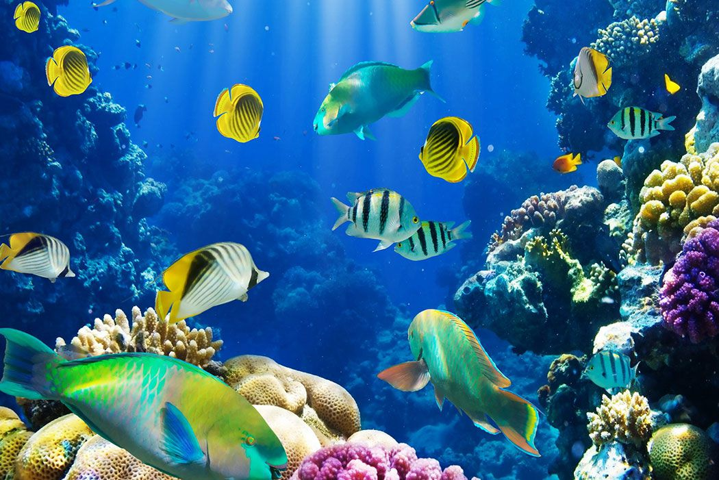 Papel De Parede 3D | Oceanos 0009 - papel de parede paisagem  - Paredes Decoradas