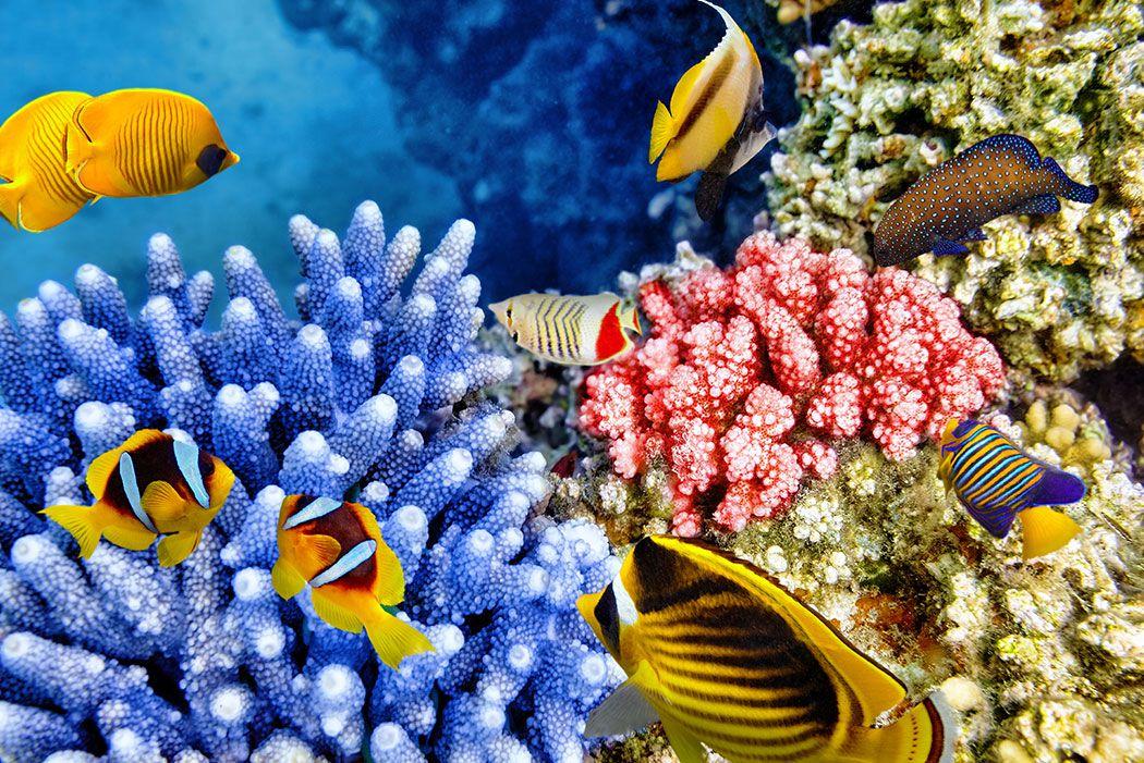 Papel De Parede 3D | Oceanos 0010 - papel de parede paisagem  - Paredes Decoradas