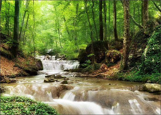 Papel de Parede Paisagens Floresta 0002  - Paredes Decoradas