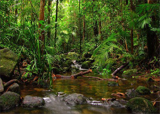 Papel de Parede Paisagens Floresta 0009  - Paredes Decoradas