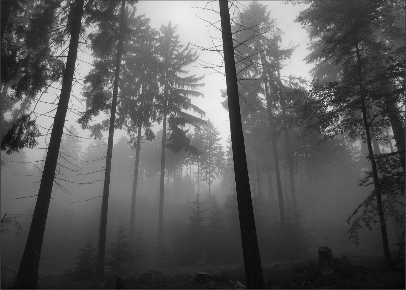 Papel de Parede Paisagens Floresta 0011  - Paredes Decoradas