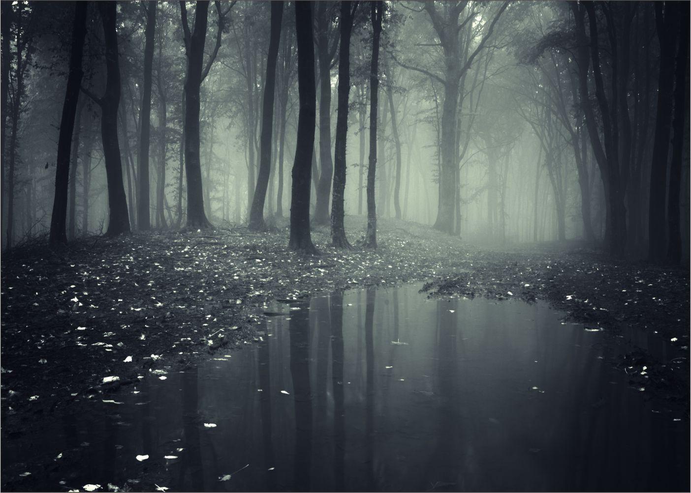 Papel de Parede Paisagens Floresta 0013  - Paredes Decoradas