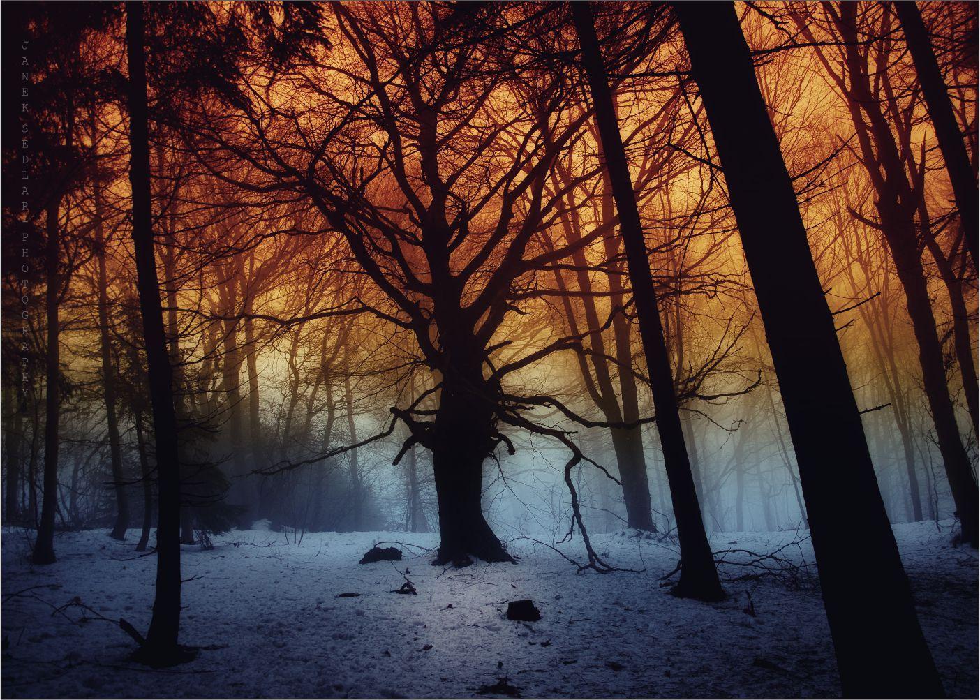 Papel de Parede Paisagens Floresta 0014  - Paredes Decoradas