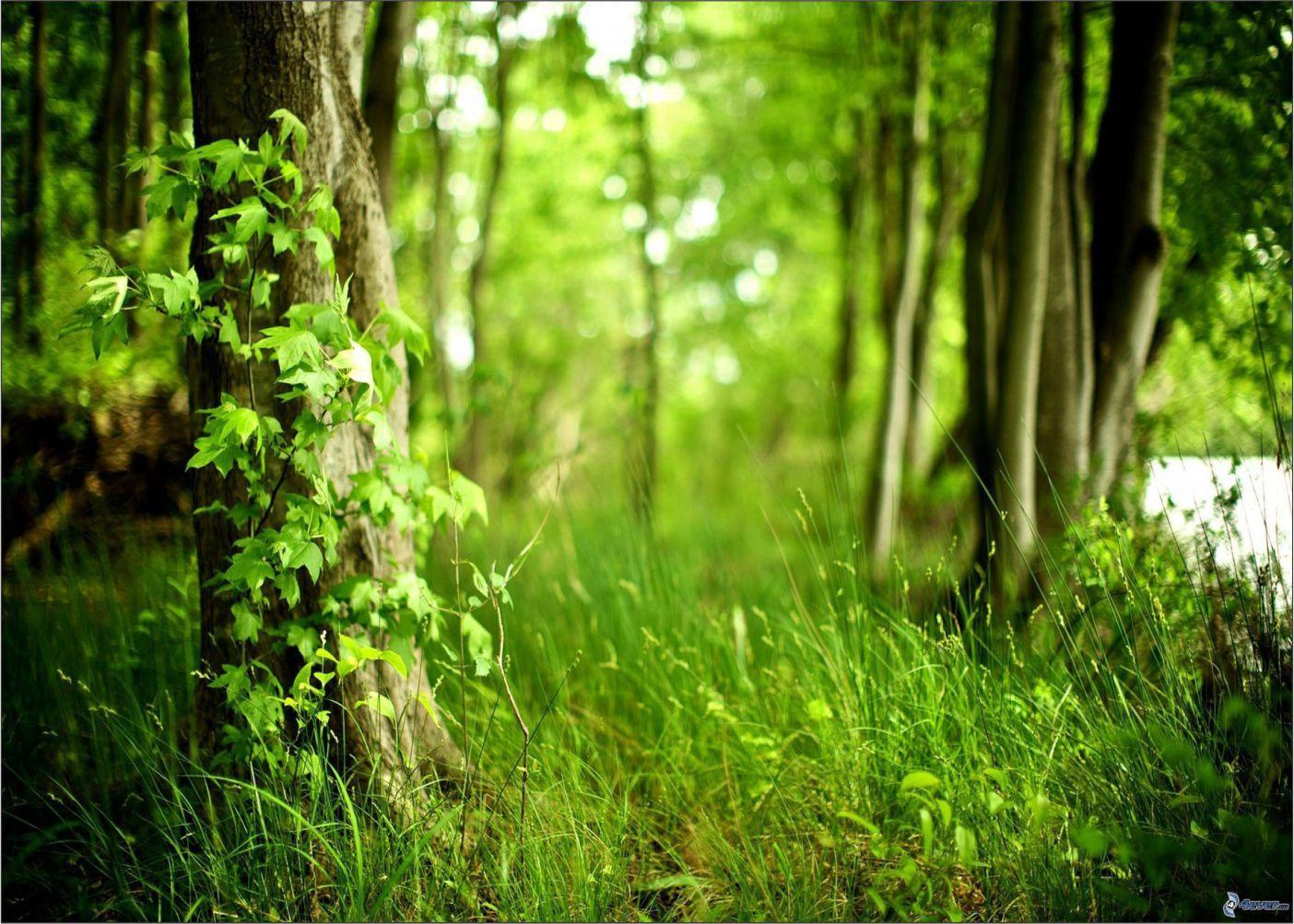 Papel de Parede Paisagens Floresta 0016  - Paredes Decoradas