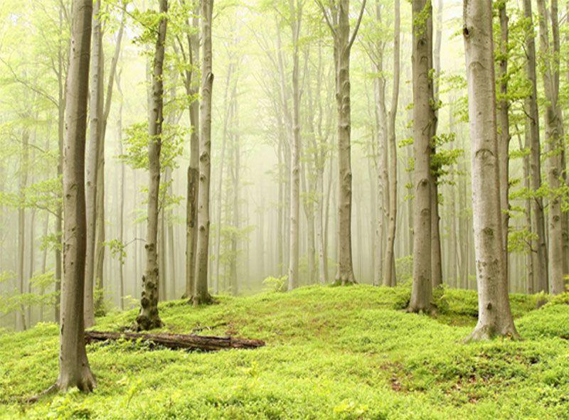 Papel de Parede Paisagens Floresta 0023  - Paredes Decoradas