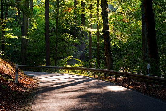 Papel de Parede Paisagens Floresta 0025 - Adesivo de Parede   - Paredes Decoradas