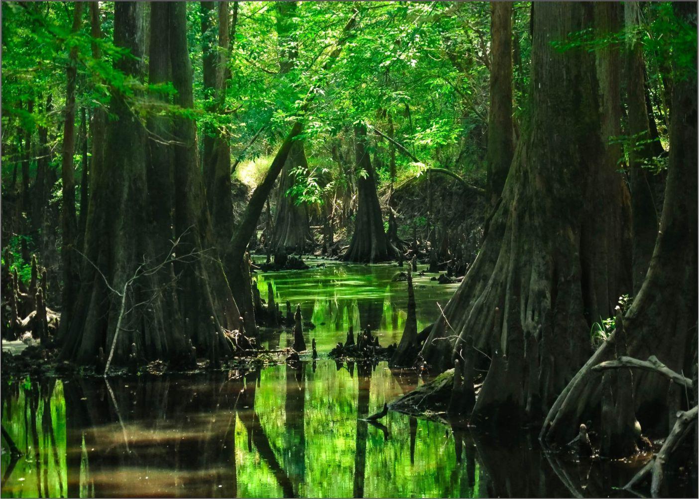 Papel de Parede Paisagens Floresta 0026 - Adesivo de Parede   - Paredes Decoradas