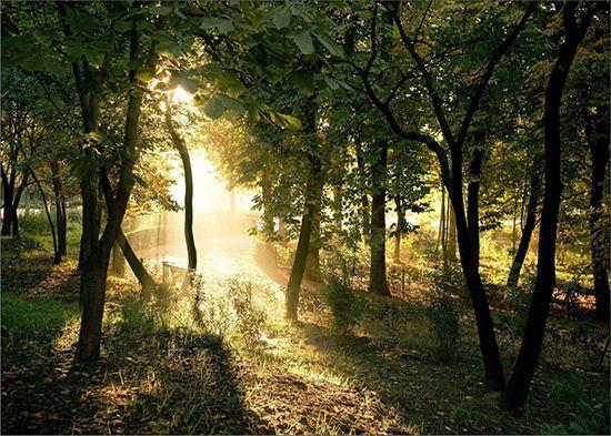 Papel de Parede Paisagens Floresta 0033 - Adesivo de Parede   - Paredes Decoradas