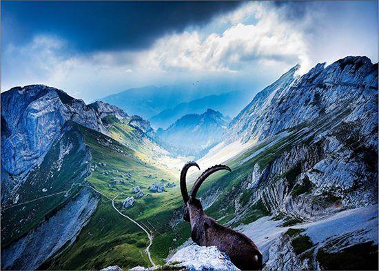 Papel de Parede Paisagens Montanhas 0014 - Adesivo de Parede   - Paredes Decoradas
