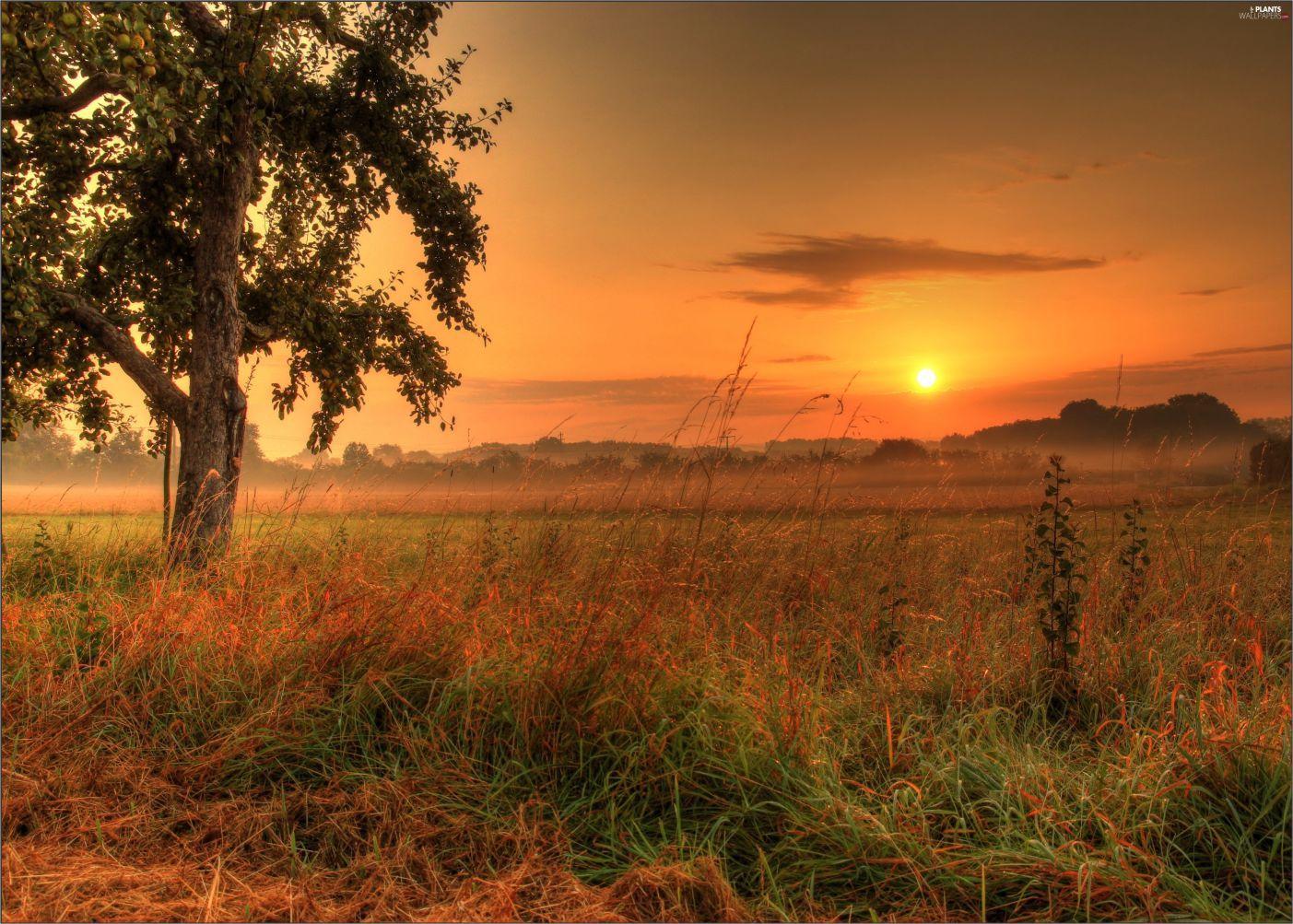 Papel de Parede Paisagens Por do Sol 0010  - Paredes Decoradas