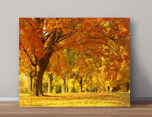 Quadro Decorativo Paisagens 0039 - Paredes Decoradas