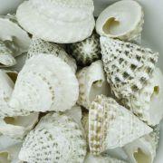 Concha - Torong T Natural White 1'' (Tectus Fene)