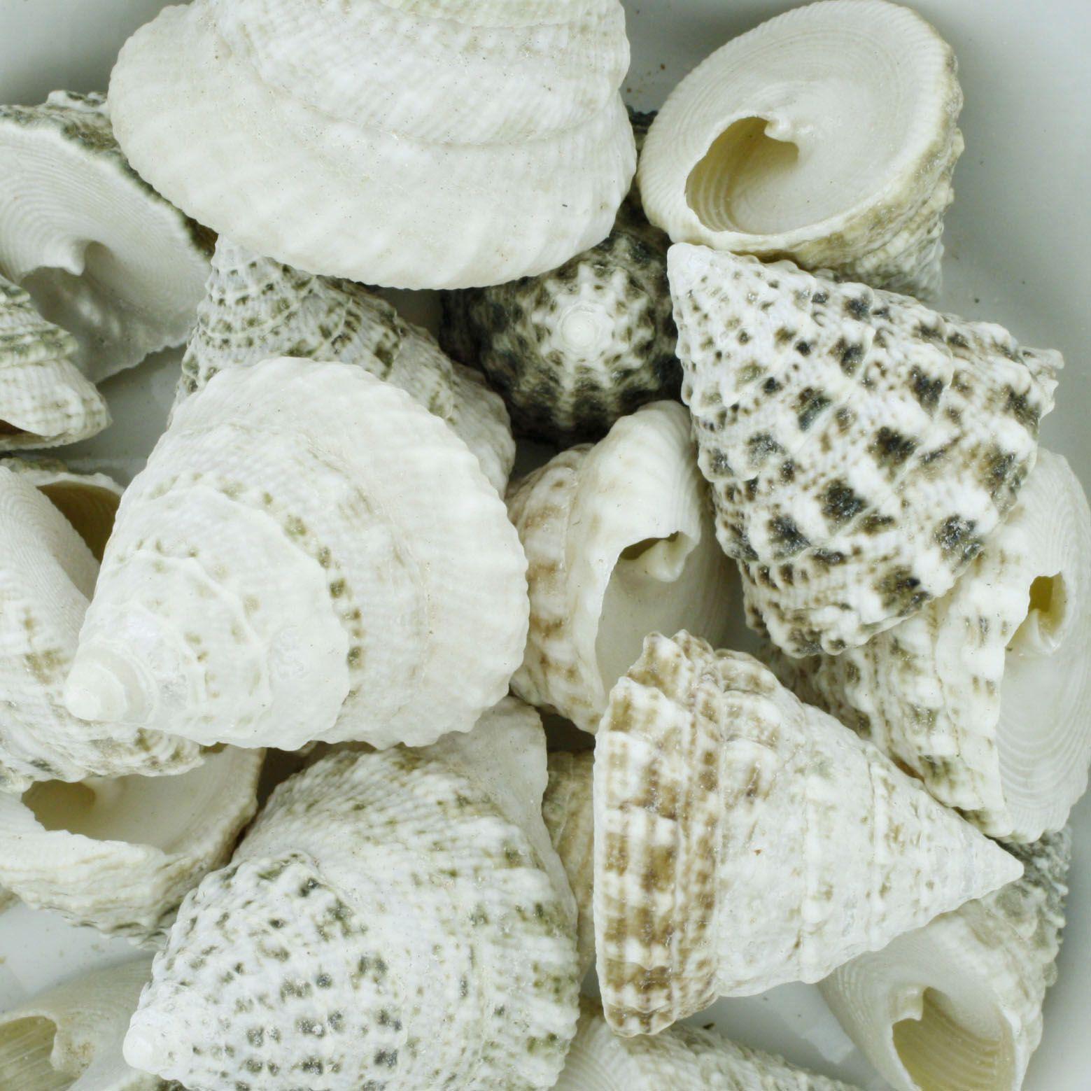 Concha - Torong T Natural White 1