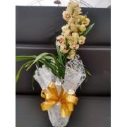Orquídea Cymbidium - Promoção Dia das Mães
