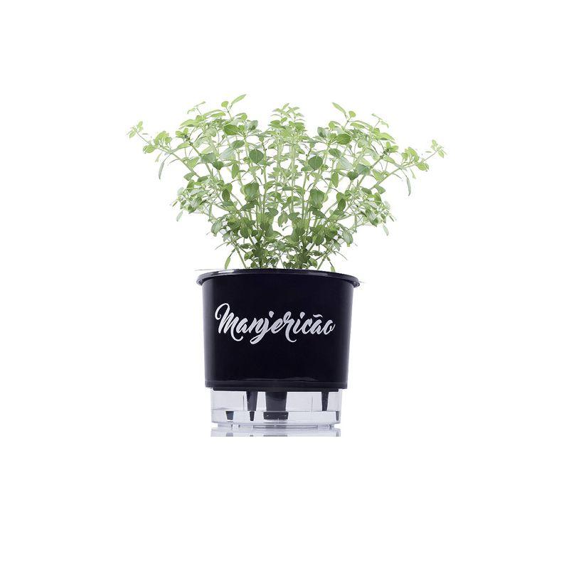 Kit Vaso Auto Irrigável Gourmet