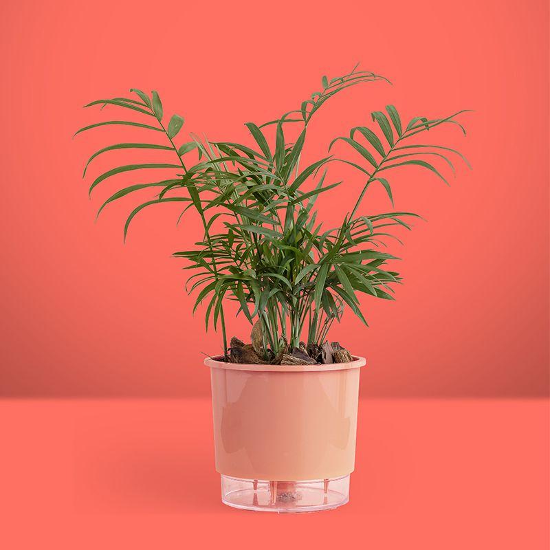 Vaso Plástico Para Decoração Autoirrigável Tamanho 03 Coral Raiz
