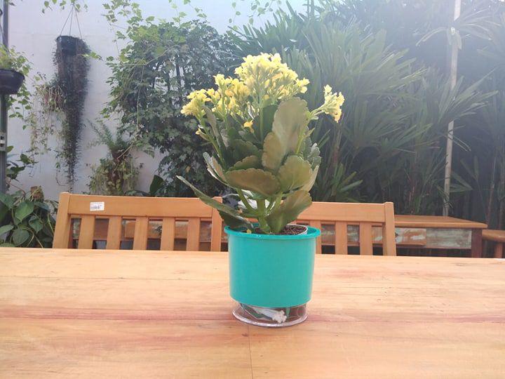 Vaso Plástico Para Decoração Autoirrigável Verde Tamanho 02 Whises Raiz