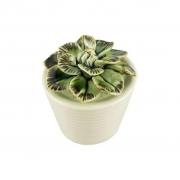 Vaso com Suculenta de Cerâmica