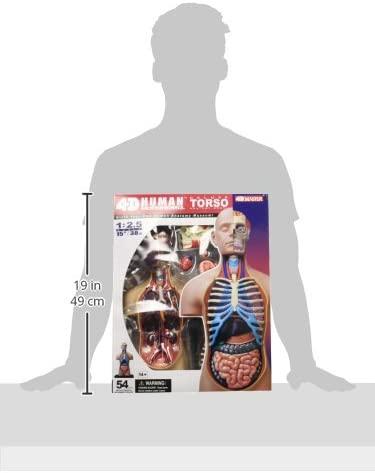 Anatomia Torso Humano - Kosmika 03373