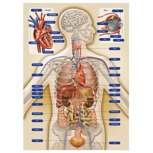 Jogo Anatomia - Grow 3443