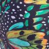 124-Butterfly