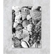 Decorativo - Conchas do Mar