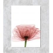 Decorativo - Raio-X Flor Rosa
