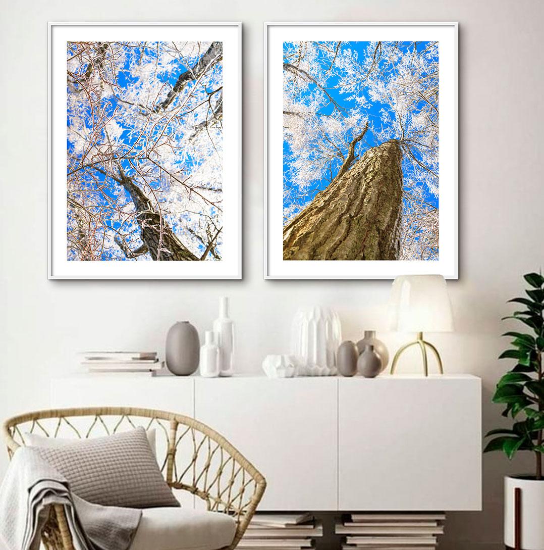 Kit de Quadros Decorativos Árvores Céu Azul