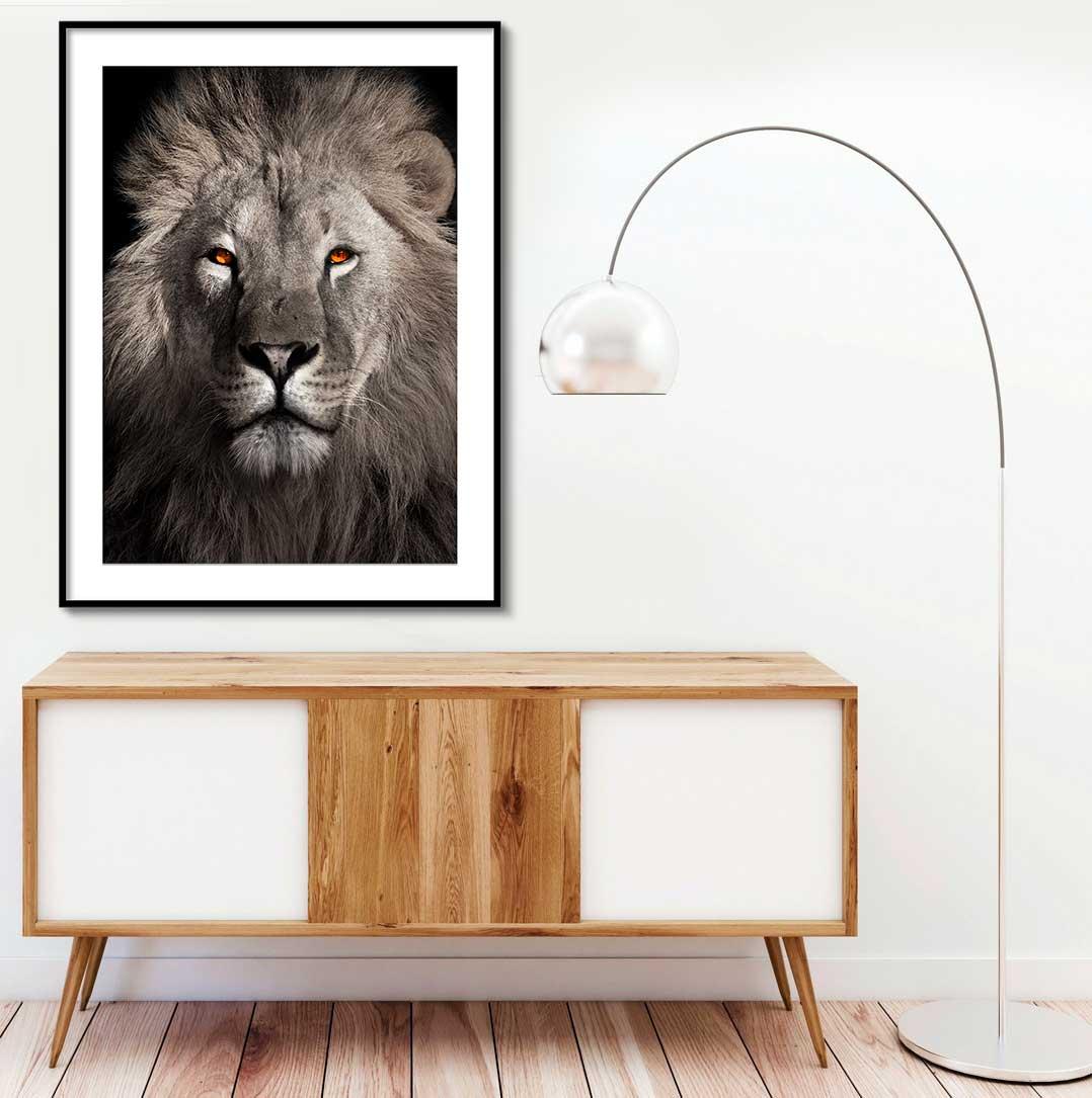 Quadro Decorativo de Animais -  Fotografia Leão de Judá