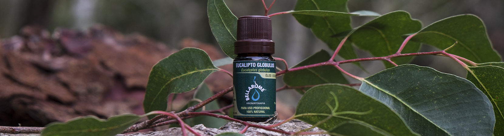 Óleos essenciais bellarome eucalipto