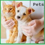 Workshop Aromaterapia para Pets