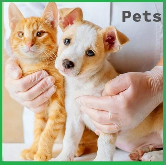 Workshop Aromaterapia para Pets  - Bellarome Aromaterapia