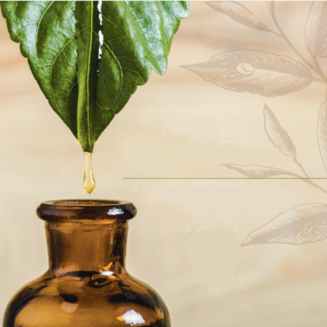 Workshop: Óleos Vegetais em Tratamentos Estéticos Naturais  - Bellarome Aromaterapia