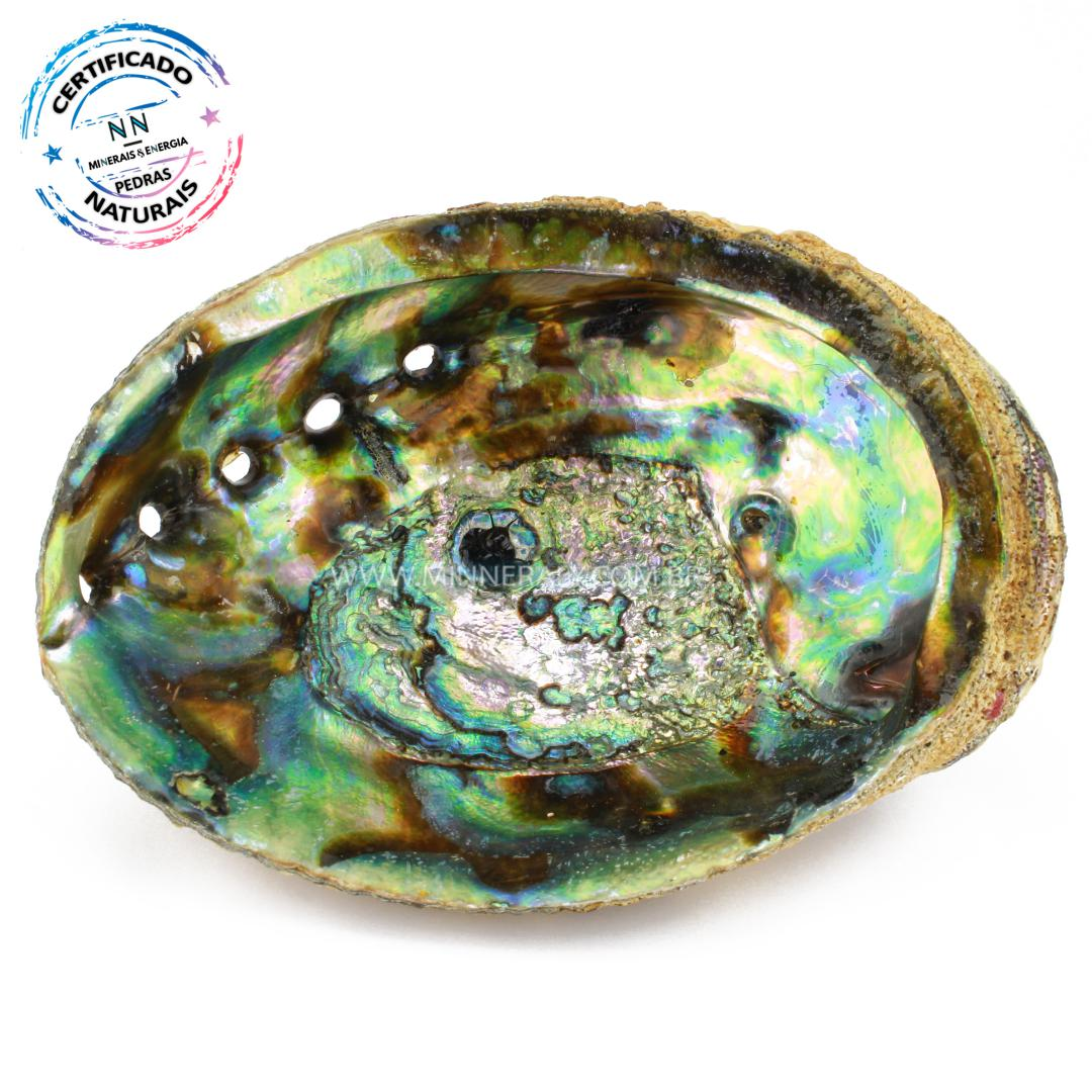 Concha em Abalone IN Natura (0,148KG; ALT: 6,4CM; COMP: 16,9CM; LARG: 13,4CM)