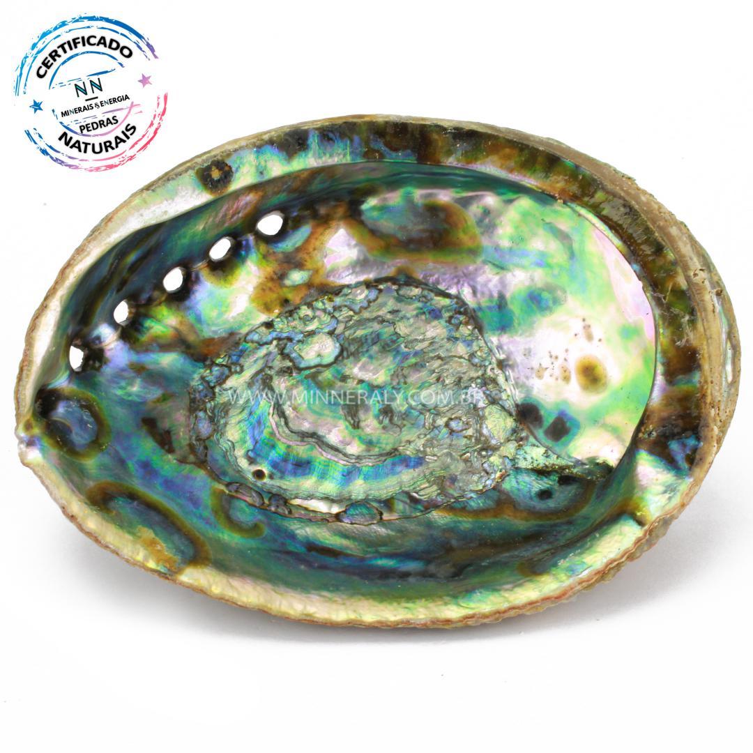 Concha em Abalone in Natura #NN215