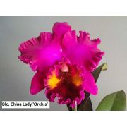 Blc. China Lady 'Orchis' - Tamanho 3