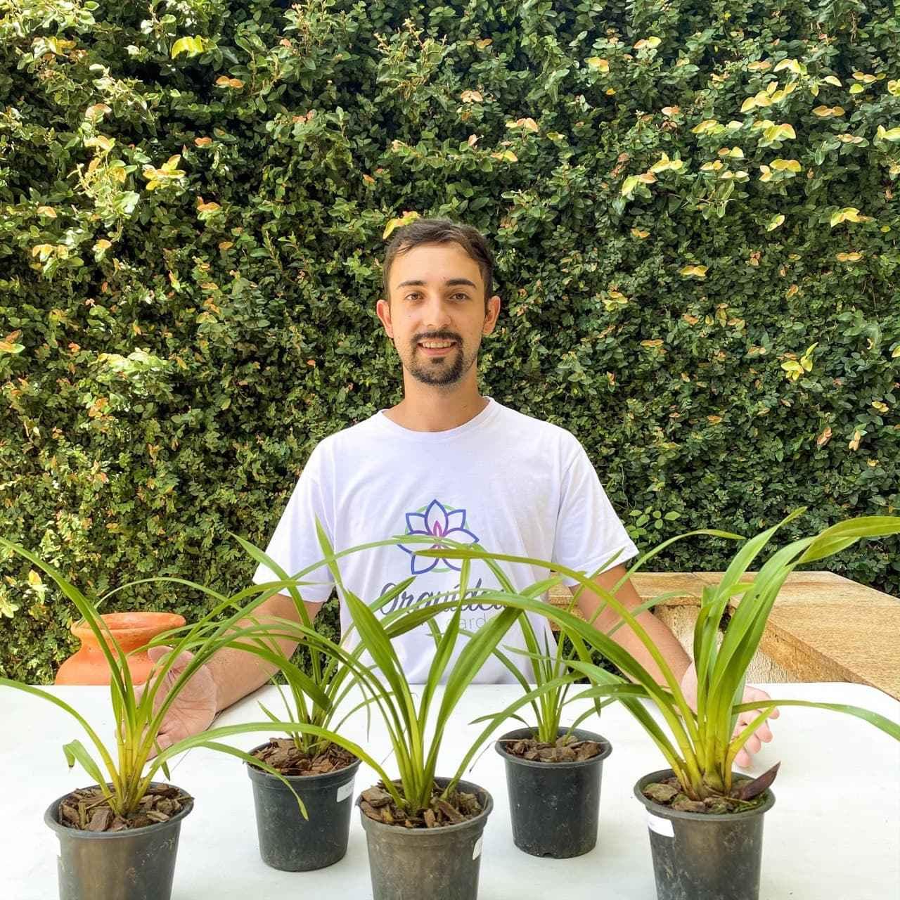 Kit 10 mudas Orquídea Cymbidium (JOVEM)  - ORQUIDEA GARDEN