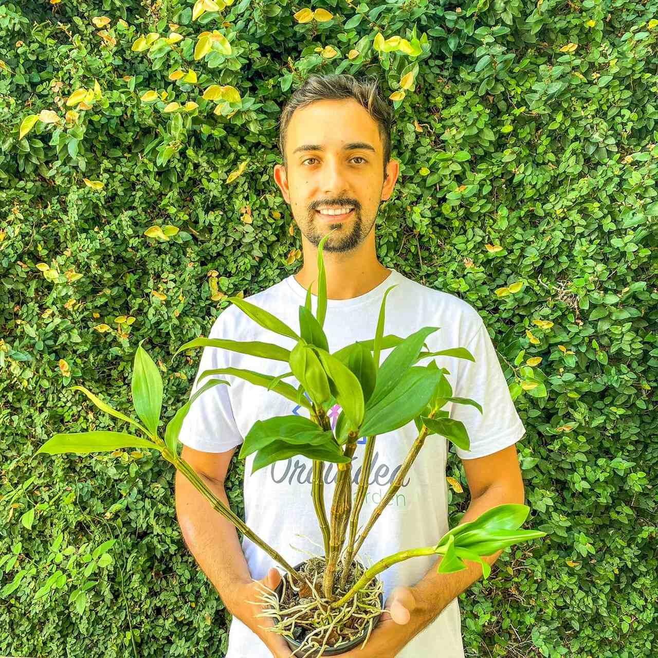 Orquidea Dendrobium Pendente Thyrsiflorum Adulta  - ORQUIDEA GARDEN