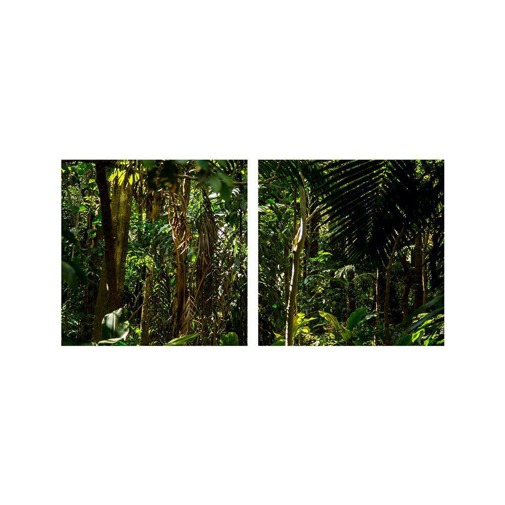 Fotografia Artistica Profissional Natureza Mata 2 de 65cmx65cm